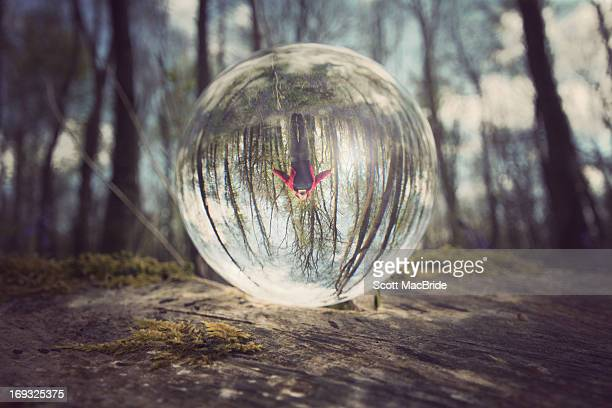 jumping in the crystal forest - scott macbride stock pictures, royalty-free photos & images