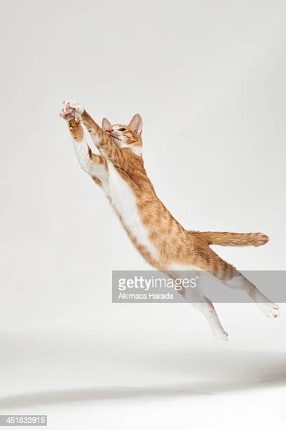 jumping kitten - chat roux photos et images de collection