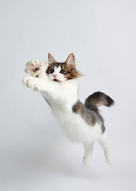Jumping Kitten Wall Art
