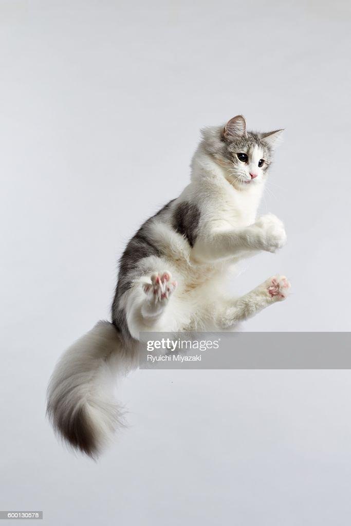 Jumping kitten : Stock Photo