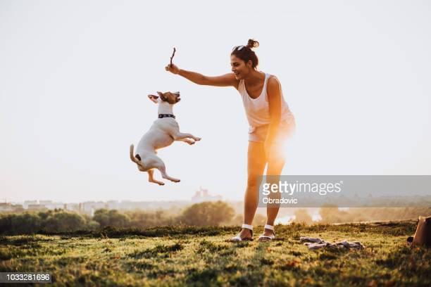 saut jamais fin. le chien aime attraper le bâton. - jack russell terrier photos et images de collection