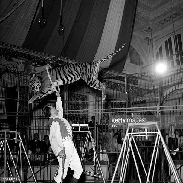 Jumping of the tiger during a number of taming of the program ''The track in stars''