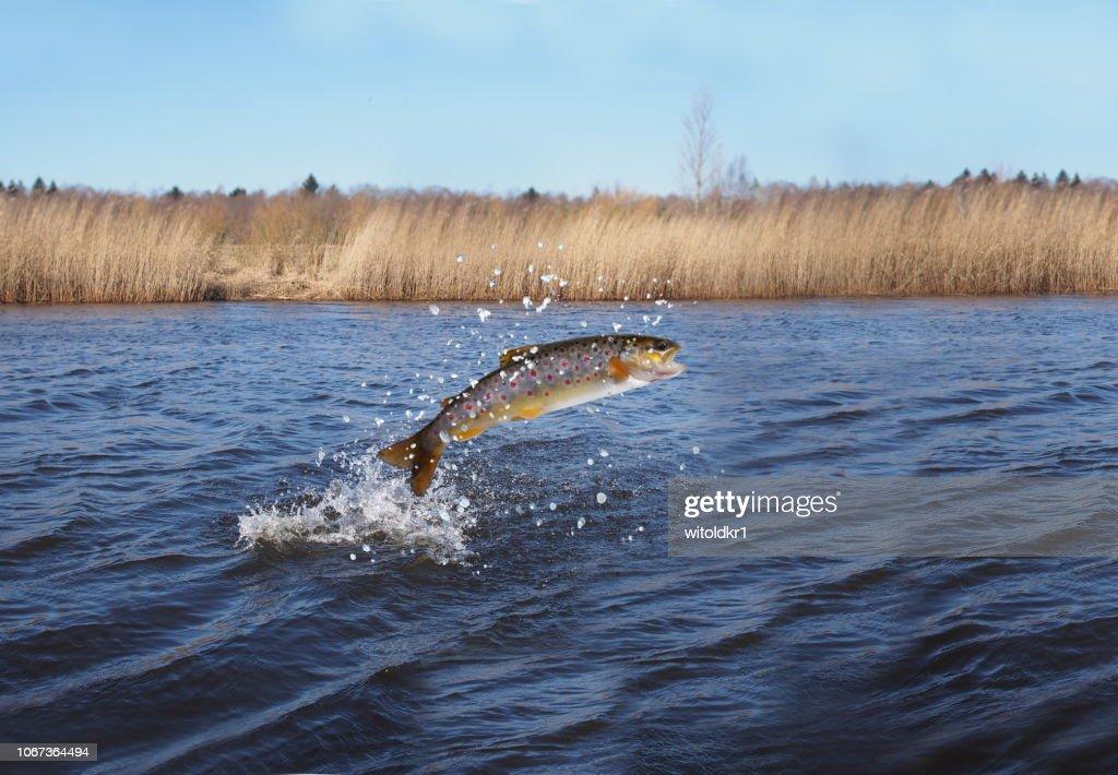 水サーモンから飛び出し : ストックフォト