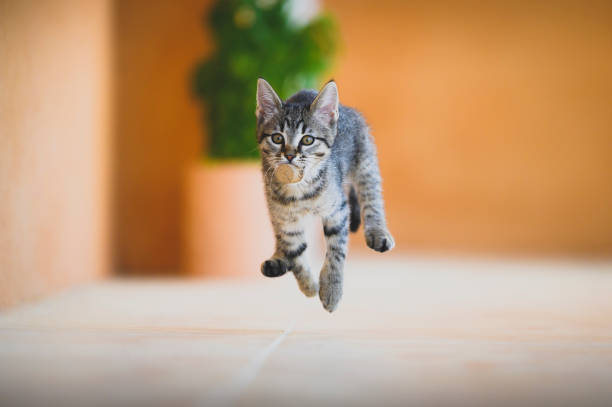 jumping - cat stock pictures, royalty-free photos & images