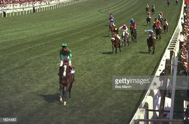 Shergar 10 lengths clear beats the rest of the field to win the Derby at Epsom racecourse in Epsom England Mandatory Credit Bob Martin/Allsport