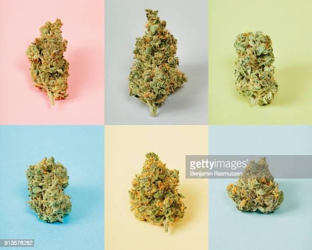 Marijuana buds sit for a still life in the Denver Relief marijuana dispensary on June 19 2013 in Denver Colorado In late November of 2000527...