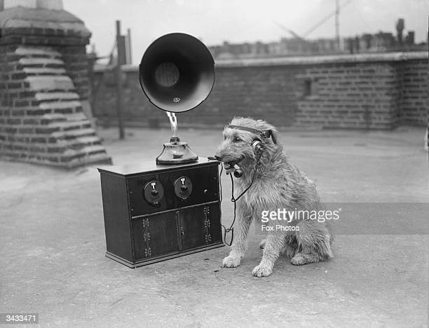 A dog listening to the radio with earphones whilst smoking a pipe
