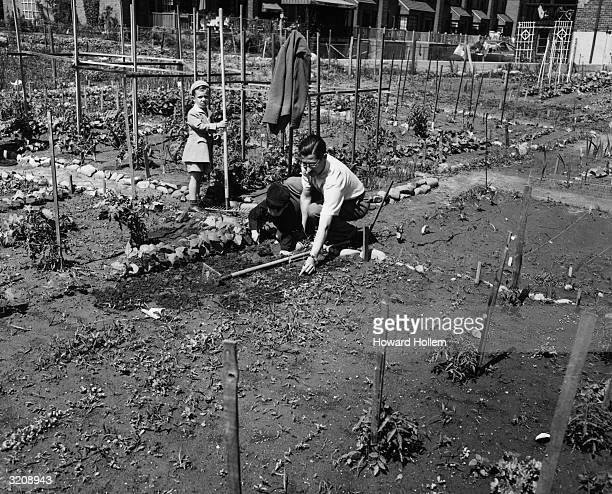 Father and his two sons participate in victory gardening in Forest Hills, Queens, New York City.