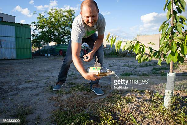 June 2016 A man is seen emptying a bottle of cheap wine to be used for throwing at a pre wedding party later on Polterabend is a tradition observed...