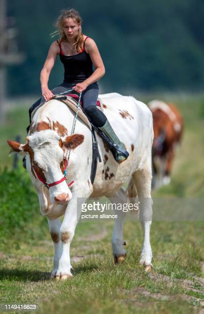 11 June 2019 MecklenburgWestern Pomerania Wolgast The 18yearold Paulina Zargus trainee at Peeneland Agrar GmbH rides on the cow Mambo No5 for a...