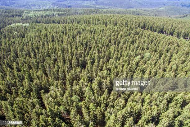 June 2019, Saxony, Markersbach: Spruce forest near Markersbach, taken with a drone. Photo: Jan Woitas/dpa-Zentralbild/ZB