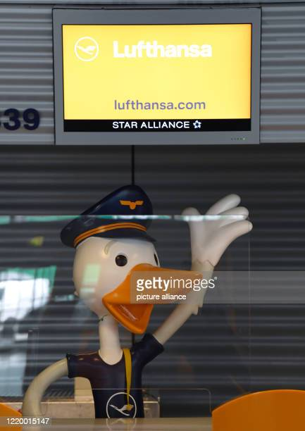 June 2020, Hessen, Frankfurt/Main: A plastic figure of a duck stands behind a plexiglass panel at the Lufthansa family check-in counter in Terminal 1...