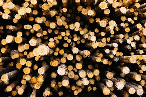 DEU: Timber Prices - Sawmill In Southern Germany