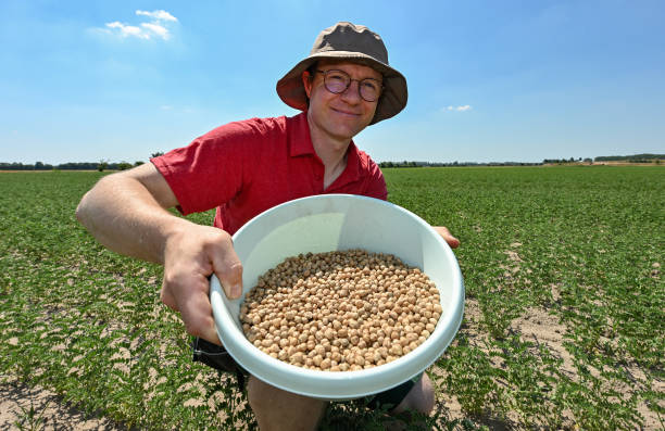 DEU: Farmers Discover Super Protein Plant Chickpea