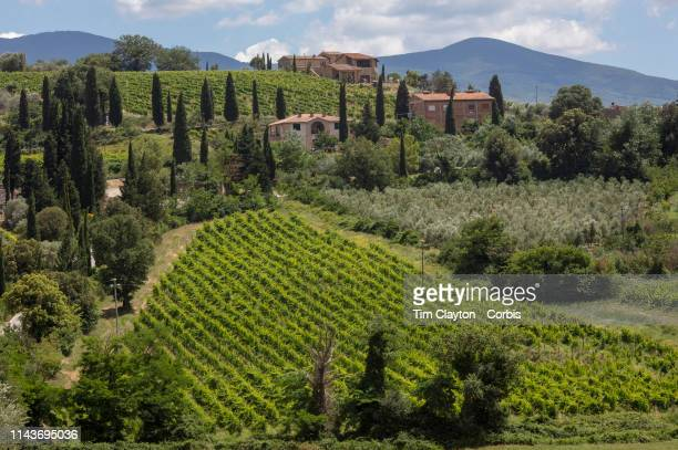 June 26: A general view of the sweeping vineyards in the surrounding district of Montalcino, a hill town in the province of Siena, Tuscany, central...