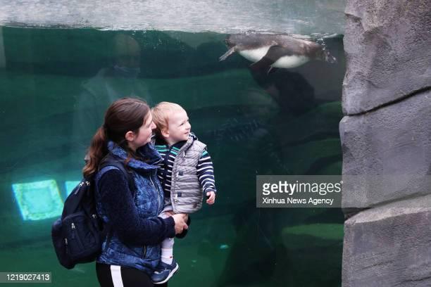 PARIS June 9 2020 A mother and her child watch penguins at the Paris Zoological Park in the Bois de Vincennes Paris France June 9 2020 Paris...