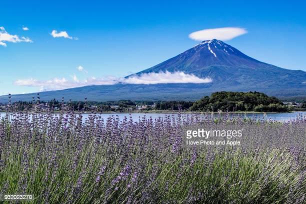 June Fuji and Lavender