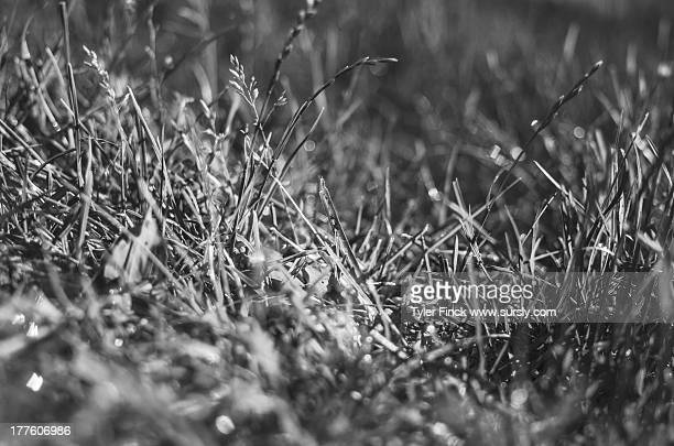 june morning, grass and dew - sursly stock pictures, royalty-free photos & images