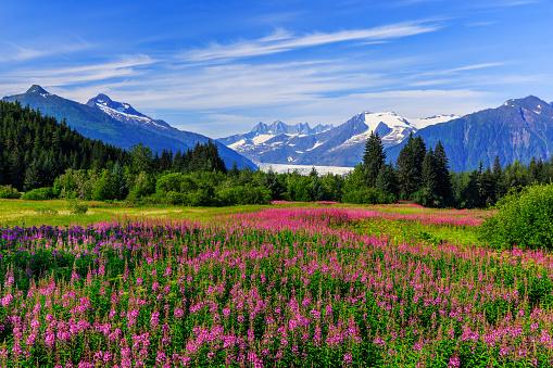 Juneau, Alaska 498296158