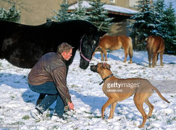Junger Mann spielt mit Vollblutpferd und Deutscher Dogge auf verschneiter Koppel