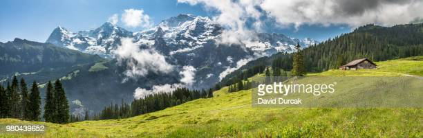 jungfrau and house on green hills in panoramic view, lauterbrunnen, berno, switzerland - swiss alps stock pictures, royalty-free photos & images