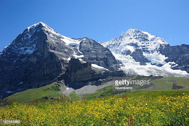 Jungfrau with yellow flower