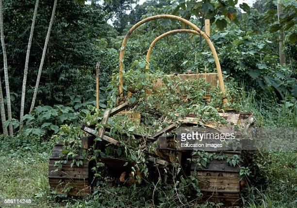 Jungle advancing on rusting machine which will clear no more forest Arnold Newman's Cathedral Rain Forest Science Preserve Osa Peninsula Costa Rica...