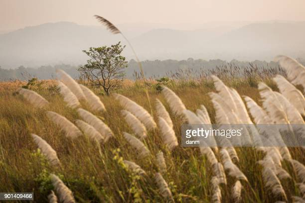 jungle atmosphere in chitwan national park, nepal. - chitwan stock pictures, royalty-free photos & images