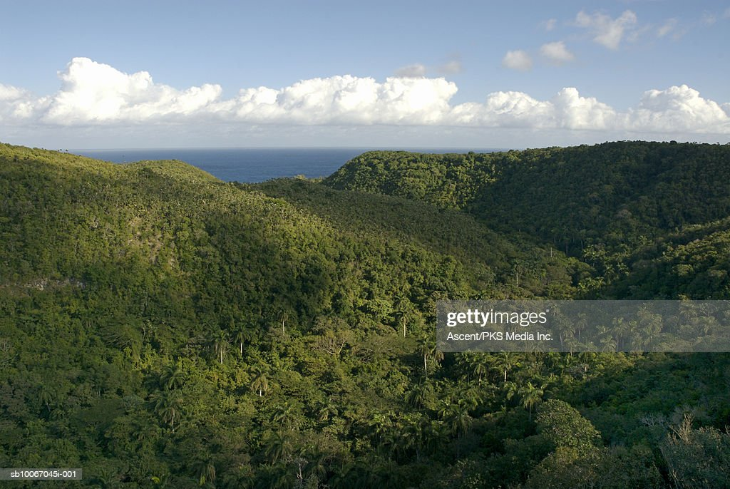 Jungle canopy and distant ocean  Stock Photo & Jungle Canopy And Distant Ocean Stock Photo | Getty Images