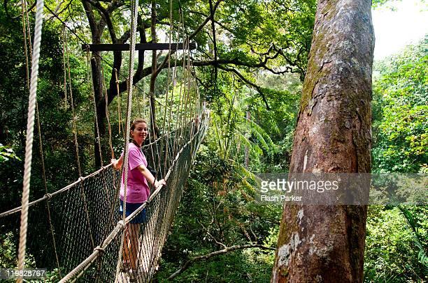 jungle canopy - taman negara national park stock photos and pictures