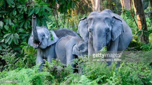 jungle encounter - indian elephant stock pictures, royalty-free photos & images