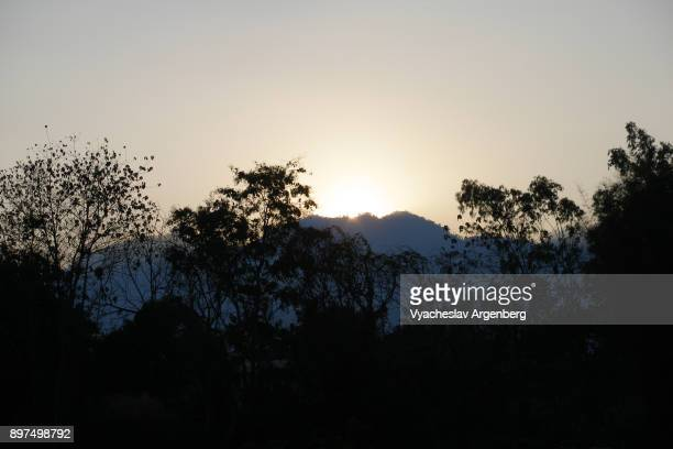 jungle forest in northern thailand near pai village - argenberg stock pictures, royalty-free photos & images