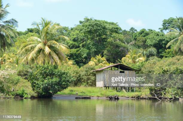 a jungle hut by the river - shack stock pictures, royalty-free photos & images
