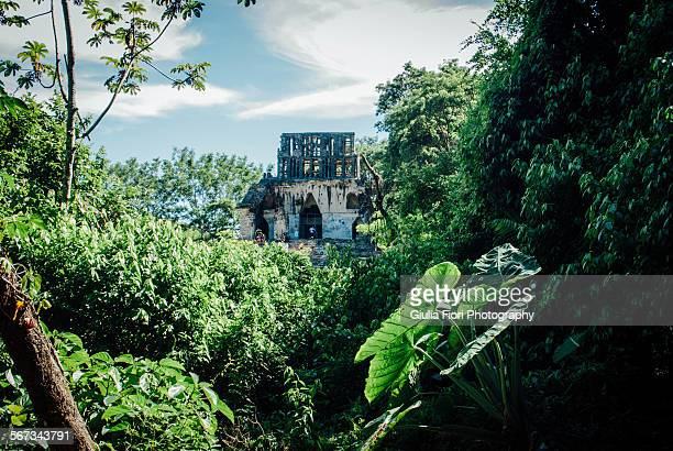 Jungle in Palenque, Mexico