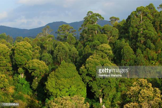 jungle in the usambara mountains, tanzania - treetop stock pictures, royalty-free photos & images