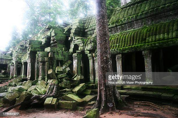 jungle is taking over at angkor wat. - old ruin stock pictures, royalty-free photos & images