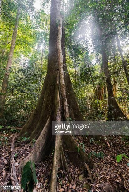 jungle, kuala tahan, taman negara national park, malaysia - taman negara national park stock photos and pictures