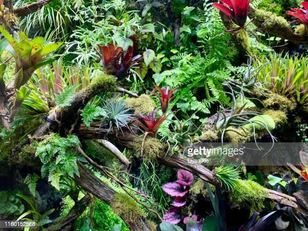 jungle leaves background - selva tropical fotografías e imágenes de stock