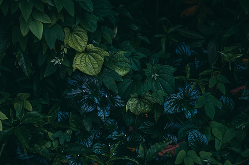 Jungle leaves background 1160380152