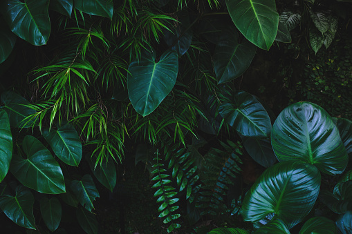 Jungle leaves background 915520716
