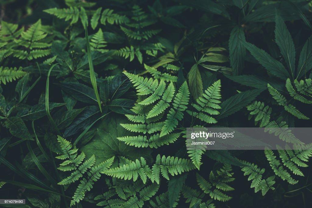 Selva sale de fondo : Foto de stock