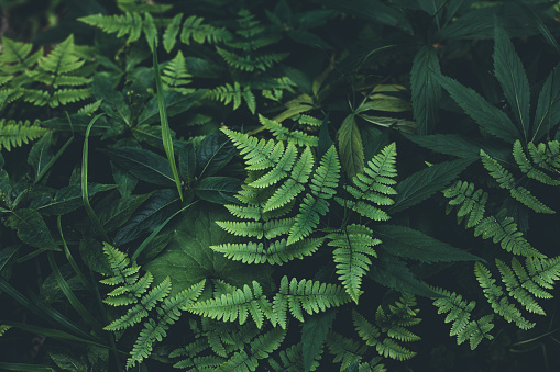 Jungle leaves background 974079490