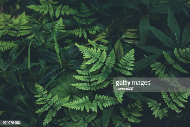 jungle leaves background - green colour stock pictures, royalty-free photos & images
