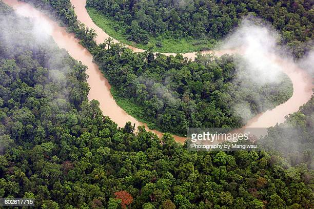 jungle meander - papua new guinea stock pictures, royalty-free photos & images