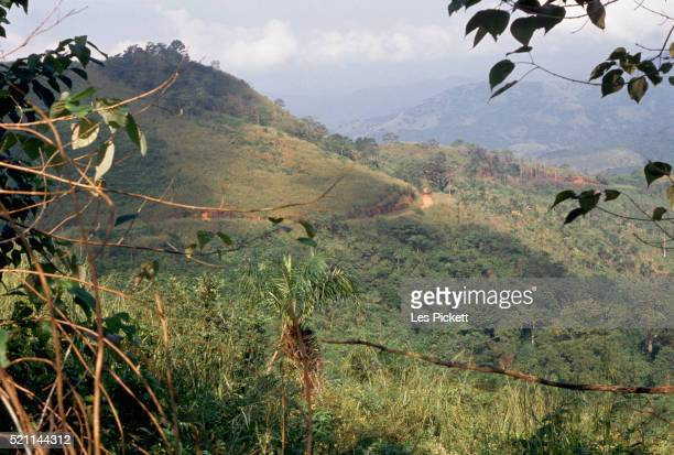 jungle on the ivory coast - côte d'ivoire stock pictures, royalty-free photos & images