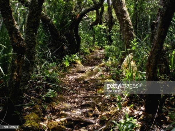Jungle Path Rangitoto