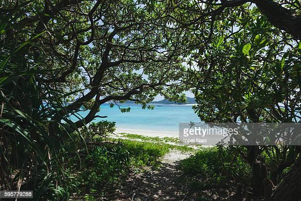 Jungle path to an idyllic tropical beach, Okinawa, Japan