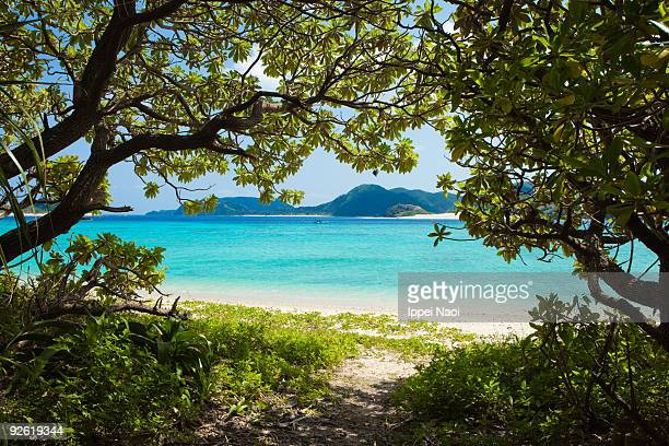 jungle path to the paradise beach with clear water - 沖縄県 ストックフォトと画像