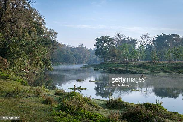 jungle river at sunrise - chitwan stock pictures, royalty-free photos & images