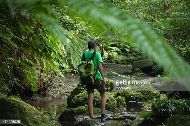Jungle stream hiking in rainforest